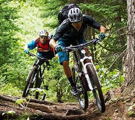 275x245 mountainbike